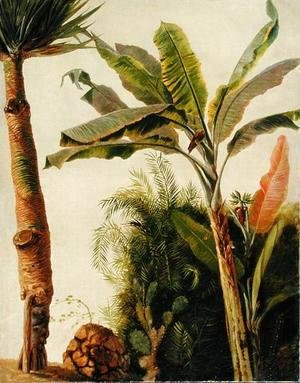 Frederic Edwin Church - Banana Tree, c.1865