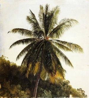 Palm Trees, West Indies