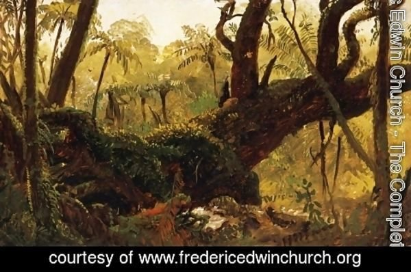 Frederic Edwin Church - Rain Forest, Jamaica, West Indies