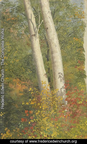 Frederic Edwin Church - Birch Trees in Autumn